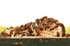 5 Steps for Handling Your Honey Bees