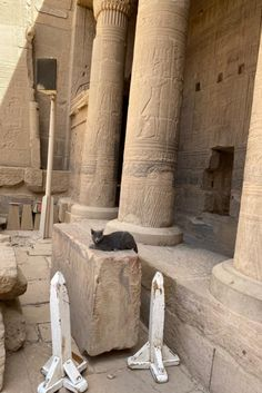 Cats In Ancient Egypt, Studying, Cute Cats, Egyptian, Cats, Pretty Cats, Study, Studio, Learning