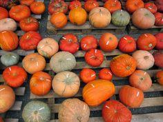 Kleine Kürbiskunde Pumpkin, Vegetables, Food, Joy Of Cooking, Vegane Rezepte, Foods, Fall, Travel, Pumpkins