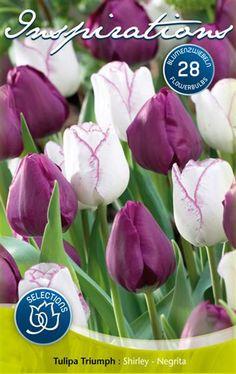 White, Purple & Lilac