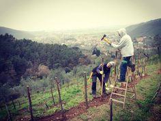 Repairs in progress #winery #vineyard #TheArtOfWine #stcaterina #vineyardvines #nature #green #organic #wood #arsvinum #tuscany #italy