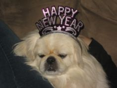 #charlie Happy New Year