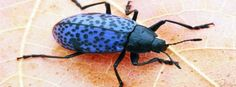 Blue Bug Facebook Covers