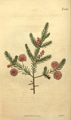 v.48 (1820-1821) - Curtis's botanical magazine. - Biodiversity Heritage Library