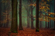 Once upon a Tree by Oer-Wout on 500px