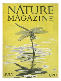 Nature Magazine print......can't pass up a dragonfly!