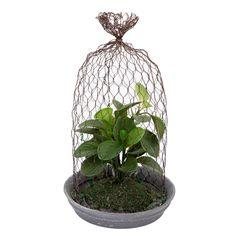 #plantas  Un elemento decorativo que aporta alegría y color. #hidalgoimport #decoración #interiordesing #homestyle #homedeco