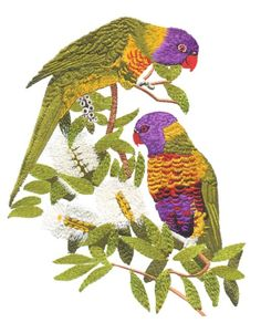 Rainbow Lorikeets by Glenn Harris OUT-1GOO2 - $8.00 : Embroidery Passbook Mall, Instant download Embroidery Designs