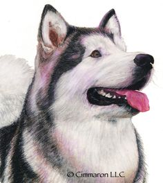 Cimmaron Dog Art creates art work, t shirts, and decals for all breeds of dogs including corgis,irish setters and vizslas. All Breeds Of Dogs, Irish Setter, Alaskan Malamute, Dogs Golden Retriever, Dog Art, Being Used, Hand Drawn, Husky, Corgi
