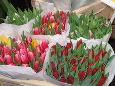 Tulipani dal mercato dei fiori di Amsterdam