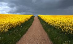 path 2by barfischer in Landscapes
