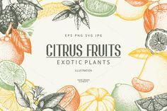 Vintage Citrus Fruits Sketch Set  by ievgeniia on @creativemarket