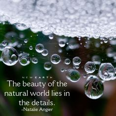 """""""The beauty of the natural world lies in the details. New Earth, Adventure Quotes, Natural World, Motivation, Nature, Beauty, Beleza, Cosmetology, Daily Motivation"""