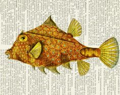 fish magnificent vintage fish artwork printed on page by FauxKiss, $10.00