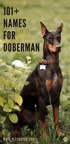 #NamesForDoberman Cool Female Dog Names, Dog Names Male, Girl Dog Names, Best Dog Names, Puppy Names, Pet Names, Doberman Dogs, Doberman Pinscher, Pet Dogs
