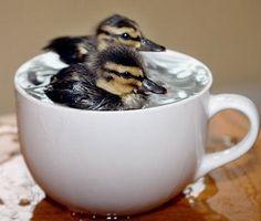 So enjoy it swim(Tak si užijte to plavání)