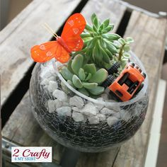 Mother's Day Gift the Kids can help with.  How to put together your own Succulent Terrarium.