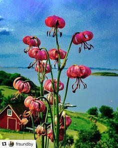 Det er fortsatt sommer  #reiseliv #reisetips #reiseblogger #reiseråd  #Repost @frsundby (@get_repost)  Sandnessjøen HelgelandskystenBlomster med fin utsikt ut mot havet! Flowers with views out to the sea!_