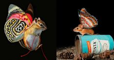 Talented #Artist Creates #Colorful Works of Art With Fake #Creatures http://ibeebz.com
