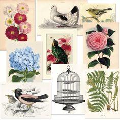 Vintage Bilder von Miss Etoile...