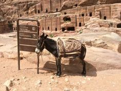 Situada en la actual Jordania y escondida en medio de montañas casi impenetrables al este del valle que conecta el Golfo de Aqaba y el Mar Muerto, se encuentra la antigua ciudad de Petra. Uno de lo…