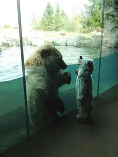 A child in a bear costume making friends with a bear at the zoo.