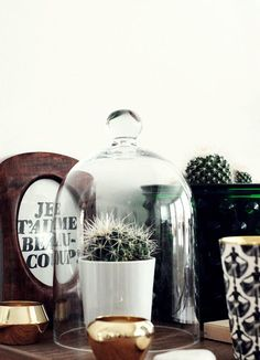 Glass cloche with potted cactus in a neutral tabletop vignette