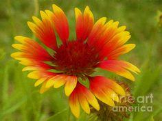 Fine Art America, Digital Art, Instagram Images, Wall Art, Flowers, Artist, Artwork, Plants, Posters