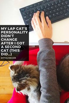 """I previously wrote an article titled, """"Help! My Cat's Personality Changed After Adopting a Second Cat!"""" where I addressed the fact that there are times when only-child, Velcro cat personalities take a turn for the less social, cuddly, and attention-seeking when a second cat is introduced into the home. I mentioned there that I had zero firsthand … Old Cats, Cats And Kittens, Cat Behavior Problems, Attention Seeking, Hiding Spots, Pet Care Tips, Cat Facts, Cat Grooming, What Is Life About"""