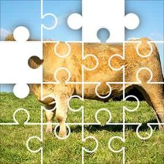 Cow Charolais Jigsaw Puzzle, 67 Piece Classic. Brown Charolais cross cow in a green field with blue sky. Charolais cattle