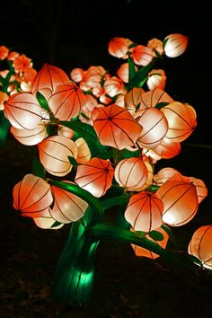 Spokane Chinese Lantern Festival in Pictures