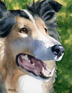 ROUGH COLLIE DOG Watercolor Art Print Signed by by k9artgallery, $12.50