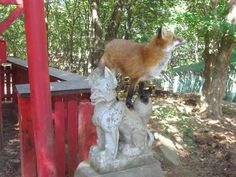The quick brown fox on top of the Inari statue.
