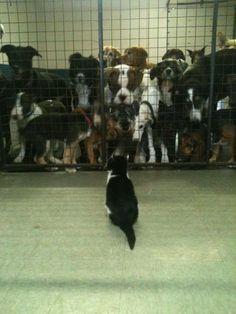"""friendlysniper-takeo:  """" Hi dog.  HI CAT HI CAT HI CAT HI CAT HI CAT HI CAT HI CAT HI CAT HI CAT HI CAT HI CAT HI CAT HI CAT HI CAT HI CAT HI CAT HI CAT HI CAT HI CAT HI CAT HI CAT HI CAT  """""""