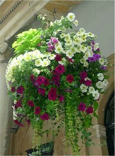 Hanging Flower Basket Inspiration Hanging baskets: could be a once way to screen the new fence by kitchen Container Flowers, Flower Planters, Container Plants, Garden Planters, Container Gardening, Pallet Gardening, Flower Gardening, Flowers Garden, Gardening Tips