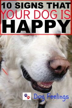 love this!!  10 Signs That Your Dog Is Happy!  https://dogfeelings.com/10-signs-dog-happy/
