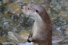 Well-Behaved Otter - January 31, 2011