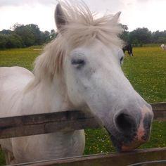 Happy horse! #llandaff