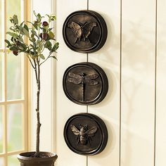 entomology decorations | ... try our Natalia Iron Plaque or our Entomology Plaques lined up in row