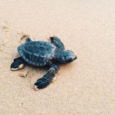 Relax, keep swimming.  #dontfreak #relax #turtle #tommybahama