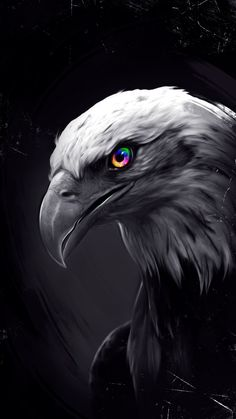 Android Eagle Wallpaper Hd For Mobile Wild Animal Wallpaper, Eagle Wallpaper, Lion Wallpaper, Dark Wallpaper, Nature Wallpaper, Hacker Wallpaper, Eagle Images, Eagle Pictures, Beautiful Birds