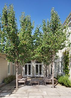 Pyrus sp. - interesting idea to plant trees in te center for a natural canopy. No need to worry about electrical wires and trimming to shape, provides shade and privacy