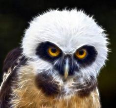 Owl - Fractal
