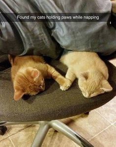 """Found my cats holding paws while napping."" Best Buddies Forever... So CUTE! #cat"