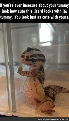 Cute lizard tummy Funny Animal Pictures of The Day – 25 Pics Cute Animal Memes, Funny Animal Quotes, Cute Funny Animals, Funny Cute, Cute Dogs, Cute Babies, Baby Animals Pictures, Cute Animal Pictures, Sports Pictures