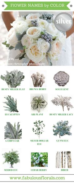 FLOWER NAMES BY COLOR! 2017 wedding trends! . Your#1source for wholesale DIY wedding flowers!#silver#diyflowers#weddingflowers#silverwedding#weddingtrends#silverflowers#greywedding#greyflowers#flowernames#diywedding#weddingcolors#flowercolors