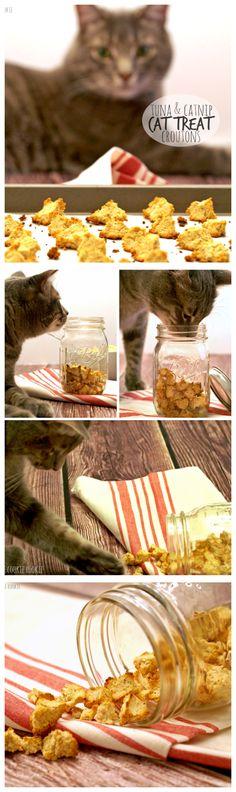 HOMEMADE CAT TREATS! Homemade Salmon & Catnip Cat Treat Croutons! My kitty loves these :) | http://www.thecookierookie.com/homemade-cat-treats/ |