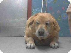 Senior dog devastated after owner surrenders him to get a new 'younger' dog