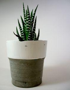 Modern Concrete Planter with Haworthia Succulent Plant