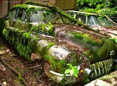 Mossy Car http://goodhal.blogspot.com/2013/10/debris-129.html #Abandoned #Automobile #Car #Debris #Moss